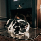 Podróżowanie ze zwierzęciem domowym – kilka wskazówek na temat bezpiecznego wyjazdu z kotem lub psem