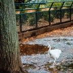 Parc de la Pépinière i mini zoo w Nancy – atrakcja nie tylko dla dzieci!