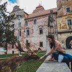 Zamek Książęcy w Niemodlinie i spotkanie z danielami. Informacje praktyczne, zwiedzanie i historia zamku